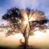 I doni spirituali e noi
